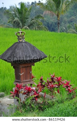 Bali, Indonesia, typical terrace rice fields