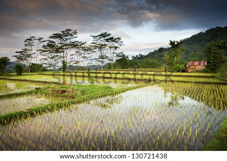 Bali Rice Field. New rice is planted in a flooded paddy in the scenic village of Sidemen, Bali in the eastern part of the island. - stock photo