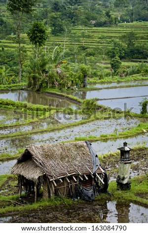 """Bali Rice Terraces. The """"real"""" Bali can be found outside the tourist areas. These rice terraces can be seen in east Bali near a village called Sidemen. Grass huts provide relief from the sun and rain. - stock photo"""