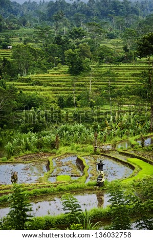 Bali Rice Terraces. This Sidemen, Bali, rice field represents some of the most beautiful landscapes in all of Asia. These verdant green rice terraces are over a thousand years old.