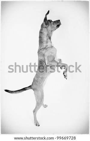 Ballerina Dog - stock photo