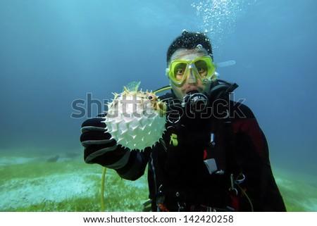 balloon fish on the diver hand - stock photo