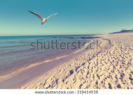 Baltic sea beach landscape with blue sea white sand and seagull - stock photo