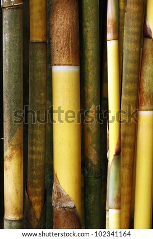 Bamboo - stock photo