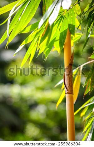 bamboo  - stock photo