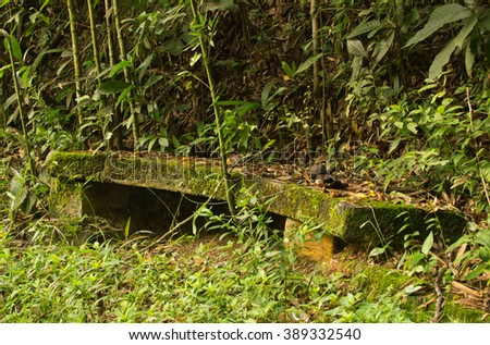Bamboo and weeds taking over bench at a park in the Atlantic Forest of Brazil - stock photo