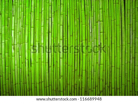bamboo background - stock photo