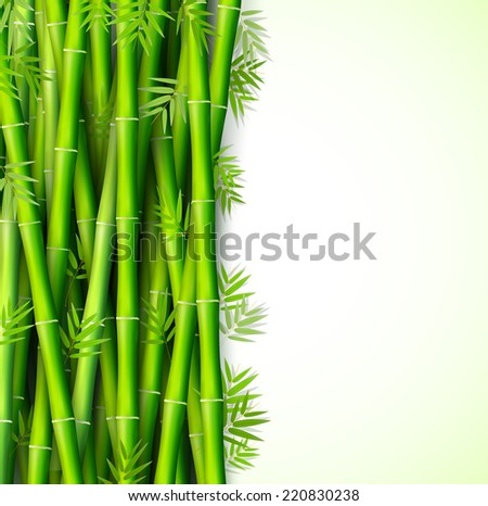 Bamboo background concept. illustration