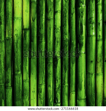 Bamboo bark. Green nature background - stock photo