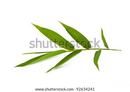 bamboo branch isolated on white