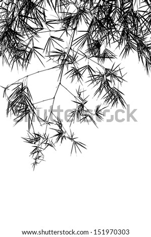 Bamboo branches isolated on white