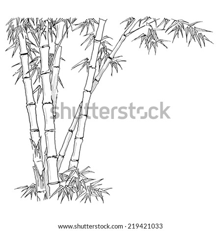 Bamboo branches on the white background.