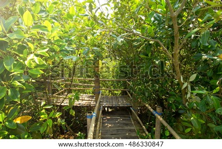 bamboo bridge in the middle of the mangrove forest