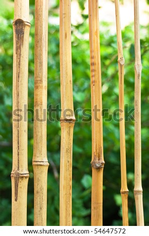 bamboo canes at the background of green garden