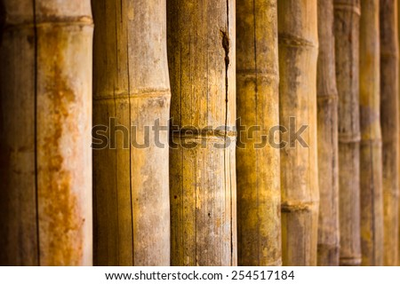 Bamboo fence and bamboo texture - stock photo
