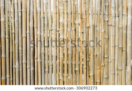 Bamboo fence background, texture