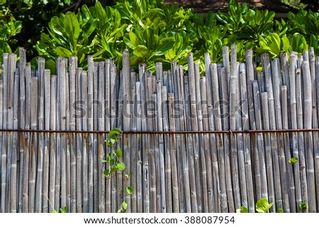 Bamboo fence on tropical beach with plants