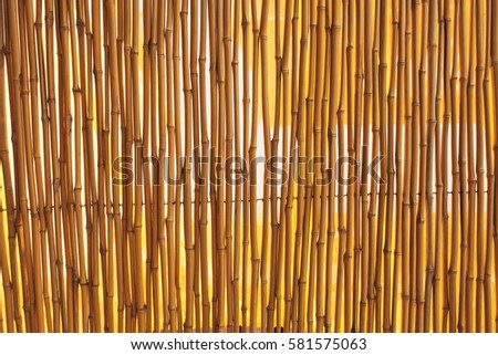 Bamboo fence texture, vibrant background.