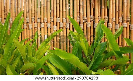 bamboo fence with banana leaves - stock photo