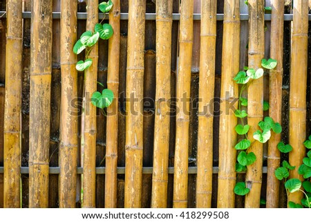 Bamboo fence with ivy - stock photo