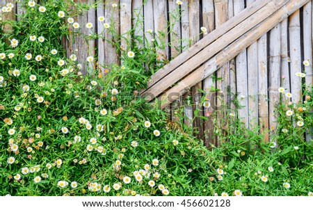 Bamboo fence with white Daisy flower, Flowers on bamboo wall background. - stock photo