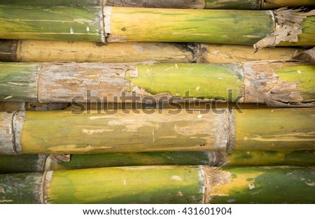 bamboo for design texture pattern and background - stock photo