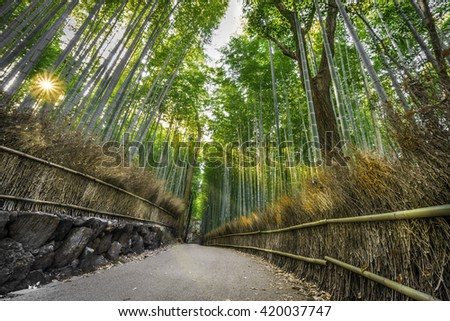 Bamboo forest and sun beams.