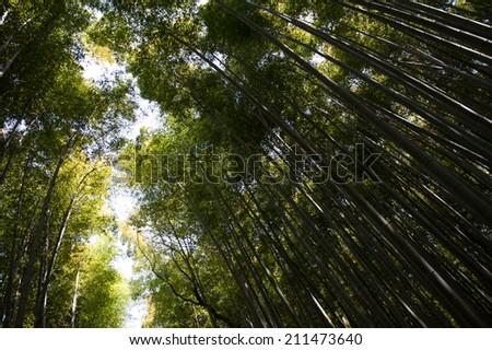 Bamboo Forest at Arashiyama - stock photo