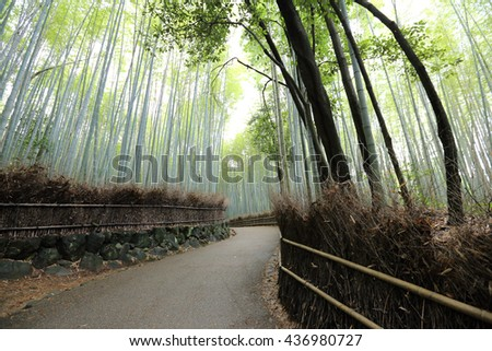Bamboo Forest  , Japanese Bamboo in Kyoto