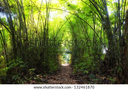 Bamboo Forest. Jungle