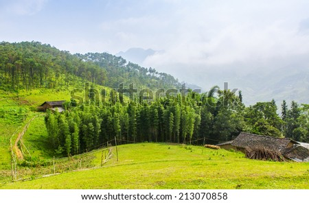 Bamboo Forest near house of the ethnic minorities  in HaGiang province. Hagiang is one of the poorest provinces in Vietnam.  - stock photo