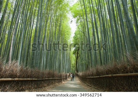 Bamboo forest path, Kyoto, Japan - stock photo