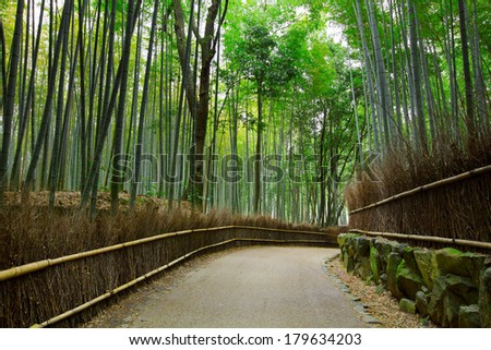 Bamboo forest with road