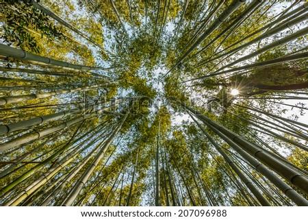bamboo forest with the sun beam, arashiyama, kyoto, Japan - stock photo