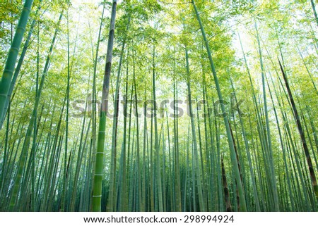 bamboo forest with young green bamboos.  Intentionally short with high key sky,  .  - stock photo