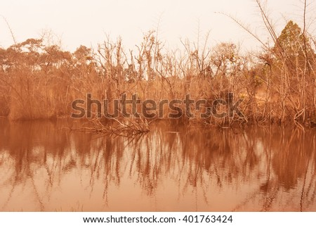 Bamboo forests wither in the lake is awesome - stock photo