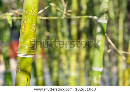 Bamboo graffiti with the word 'love' carved into the wood - stock photo