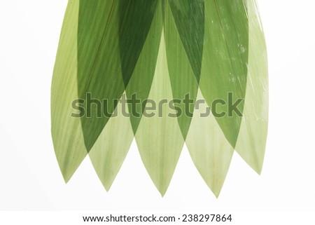 Bamboo grass - stock photo