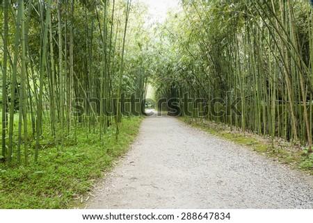 bamboo grove - stock photo