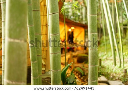https://thumb1.shutterstock.com/display_pic_with_logo/167494286/762491443/stock-photo-bamboo-grove-in-japan-762491443.jpg