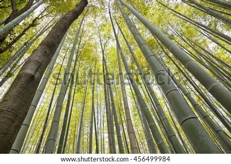 Bamboo grove, Kyoto, Japan   - stock photo