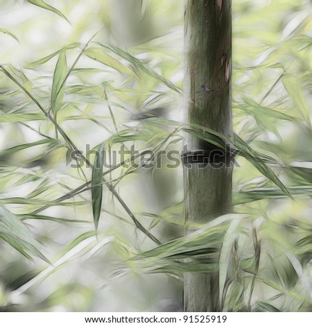 bamboo groves - stock photo
