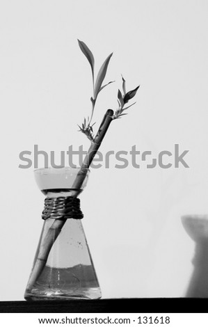 Bamboo in a flask vase and shadow black and white