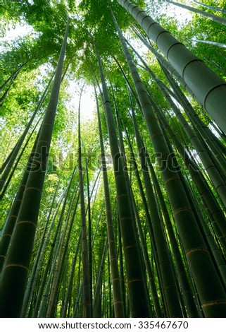 Bamboo in park Kamakura. Japan - stock photo