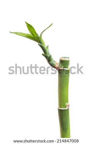 Bamboo isolated on white - stock photo