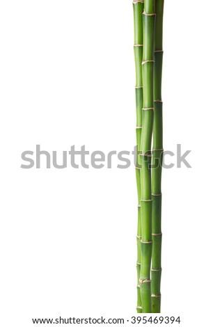 Bamboo isolated on white background.  - stock photo