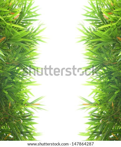 bamboo leaf background