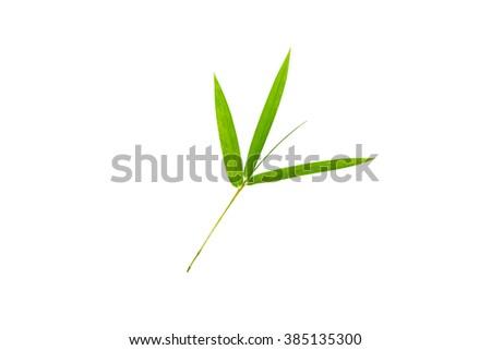 Bamboo leaf isolate on white - stock photo