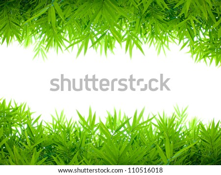 bamboo leafs on white background - stock photo