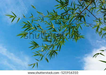 Bamboo leave on sky background
